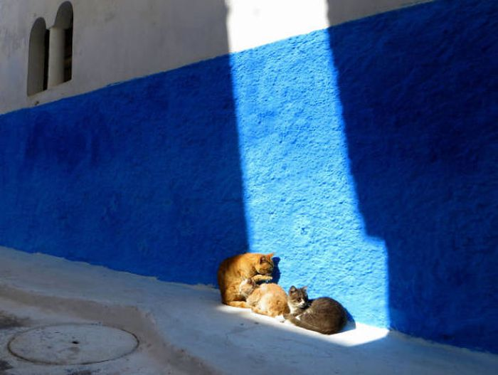 The Sun Is The Only Thing Cats Love More Than Satan (50 pics)