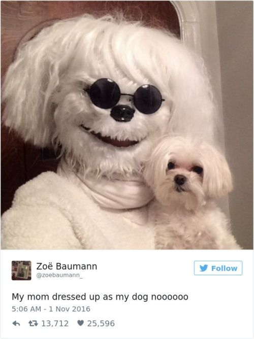 Hilarious Tweets About Dogs (25 pics)