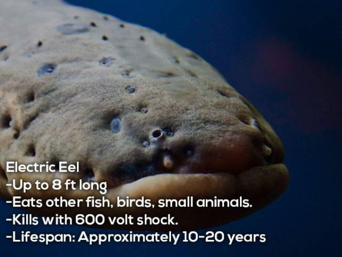 These Animals Will Discourage You From Ever Swimming In The Amazon (12 pics)