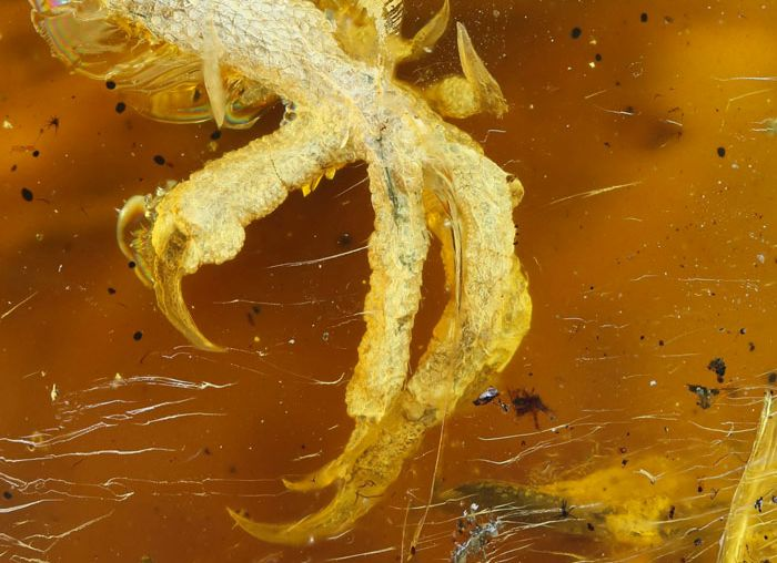 Bird Fossil Found In Amber Is Absolutely Perfect (6 pics)