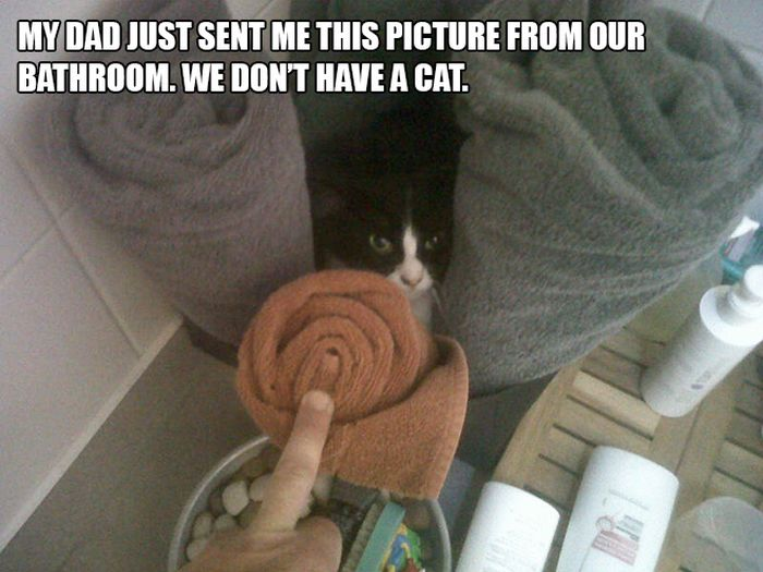 The Most Hilarious I Don't Own A Cat Moments (13 pics)