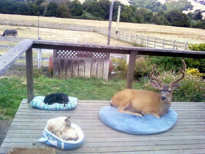 One Of These Things Is Most Definitely Not Like The Others (16 pics)
