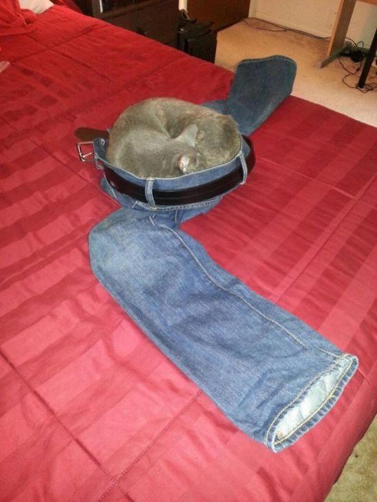 Pics Of Cats Acting Weird (30 pics)