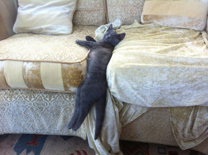 Pics Of Cats Acting Weird (30 pics)