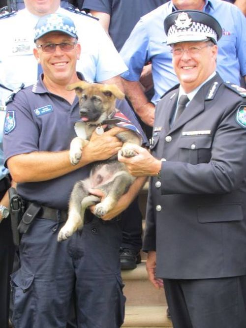 Police Dog Flunky Gets Vice Regal Dog Job (14 pics)