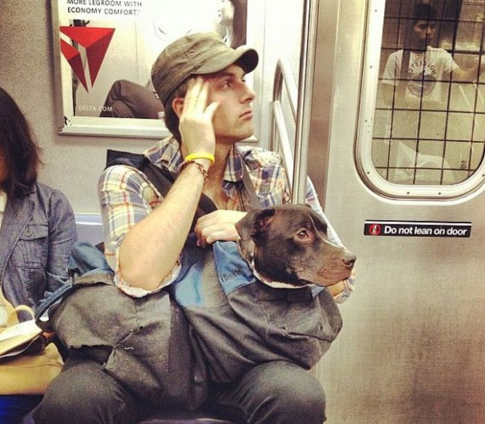 New York Metro Bans Dogs Who Don't Fit In Bags (13 pics)