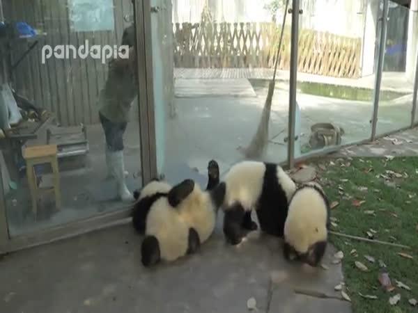Pandas Have Fun