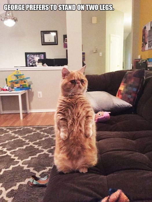 Weirdo Cats Acting Totally Weird (13 pics)
