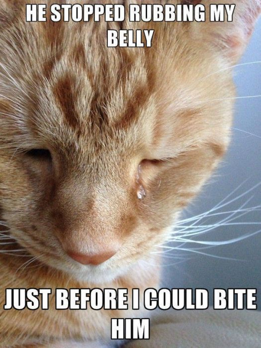 Cats Have Serious Problems That Must Be Acknowledged (33 pics)