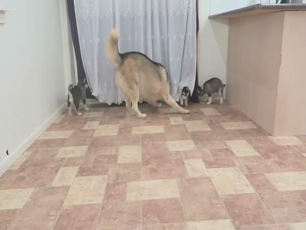Husky Met The Children