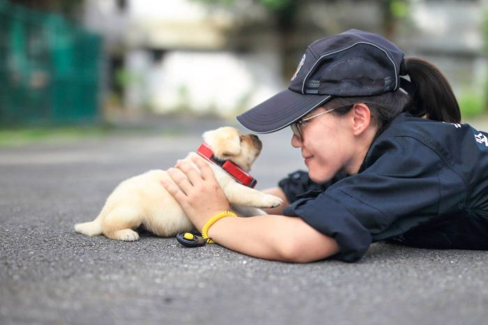 Tiny Puppy Joins The Police Force In Taiwan (3 pics)