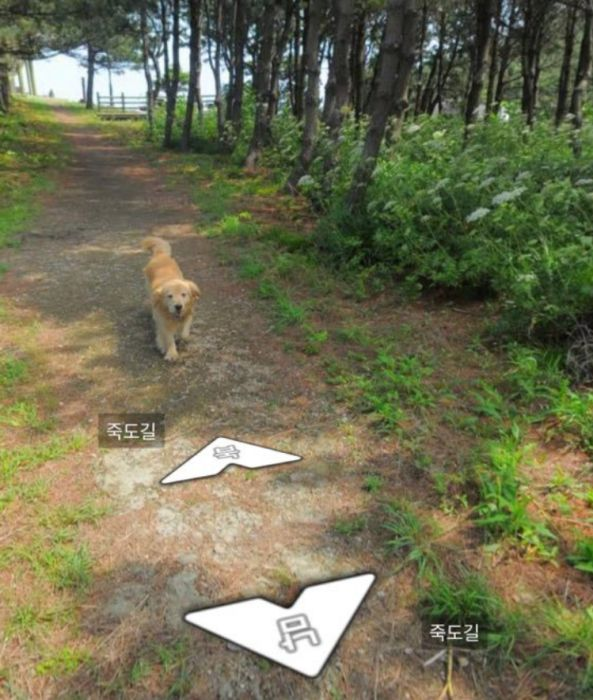 Dog Becomes Popular Thanks To Google Street View (7 pics)