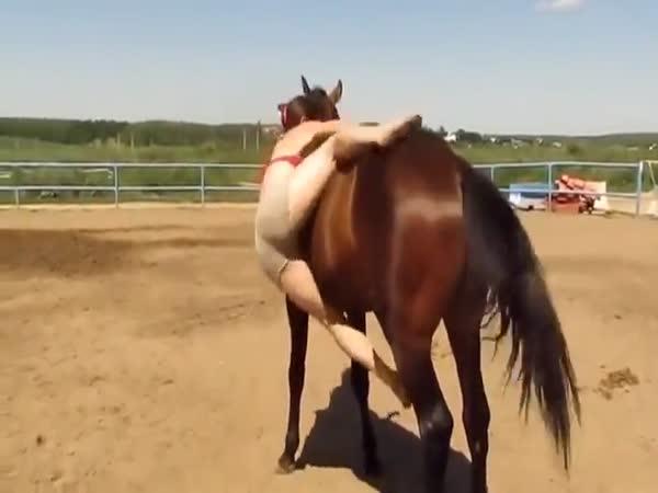 Horse Helps Girl