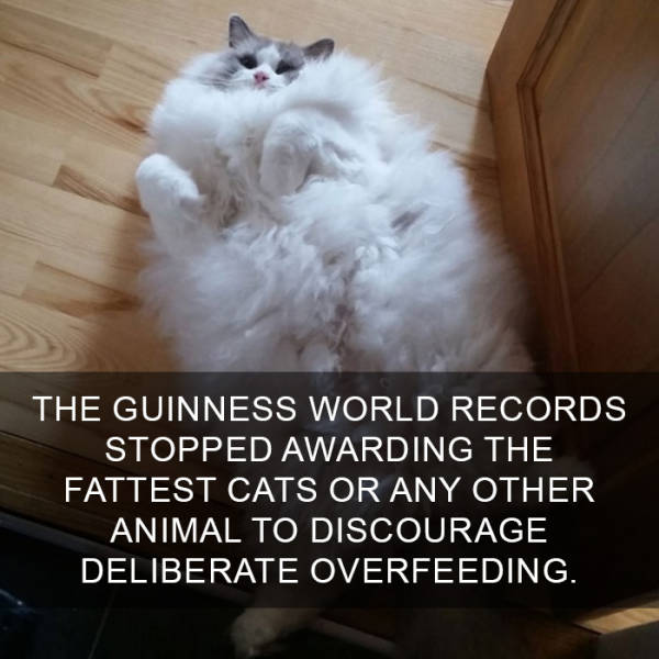 Cats Are So Interesting There's Even Facts About Them (38 pics)