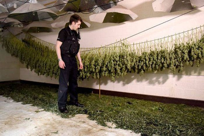 Multimillion Dollar Cannabis Factory Discovered In Nuclear Bunker (13 pics)