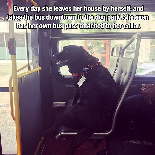 Heartwarming Reminders That Life Is Beautiful (19 pics)