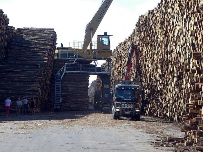 Hurricane Creates World's Largest Fallen Timber Collection In Sweden (6 pics)