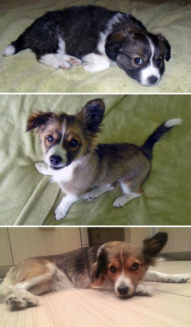 Then And Now Pictures Of Dogs Growing Up (25 pics)