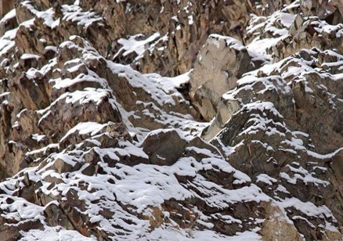 Animals With Impressive Camouflage (25 pics)