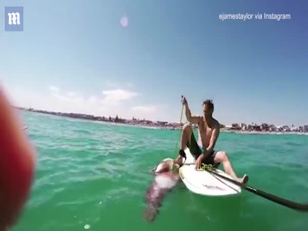 Giant Squid Wraps Huge Tentacles Around A Paddle Board