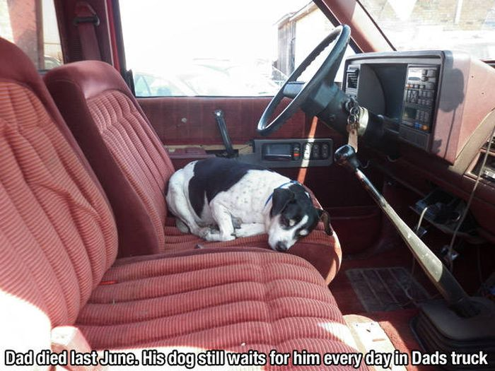 Dog Is And Always Will Be Man's Best Friend (35 pics)