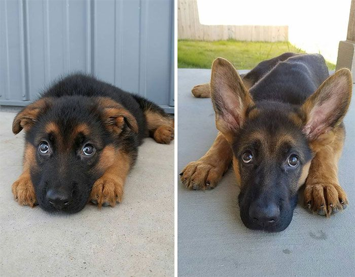 Adorable Pics Of Dogs Growing Up (21 pics)