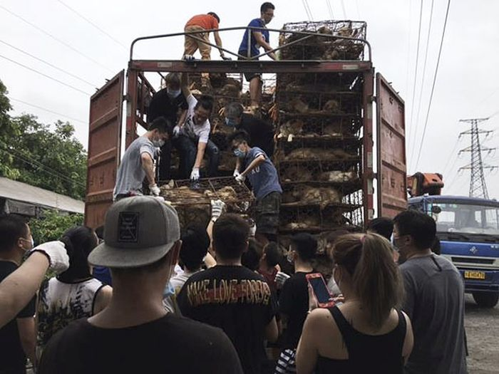 Guy Stops Truck With 1,000 Dogs About To Be Butchered (9 pics)