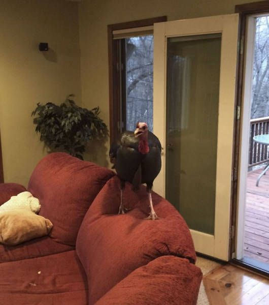 Family Returns Home To Find Unexpected Guest In Their House (7 pics)