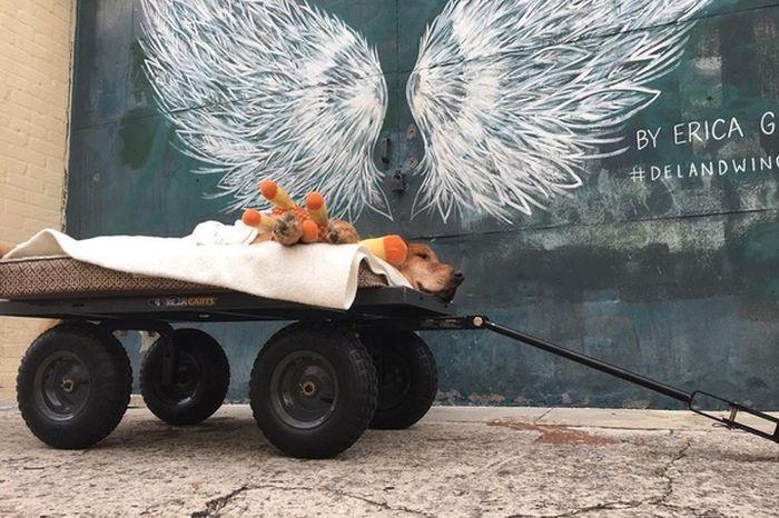 The Story Of Maverick The Dog (12 pics)