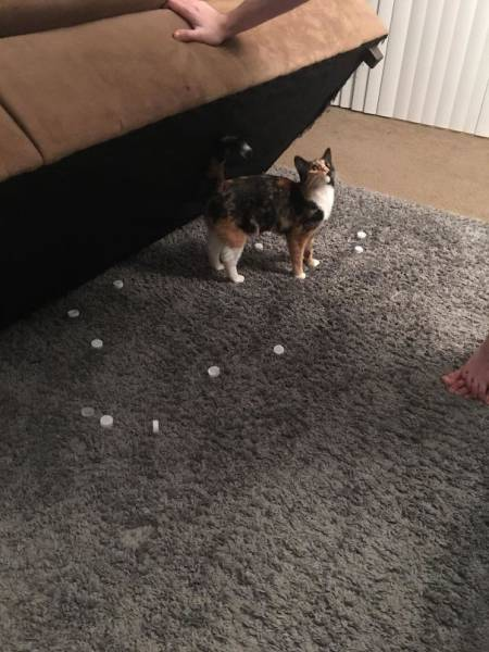 Pets Who Were Caught In The Act But Regret Nothing (38 pics)