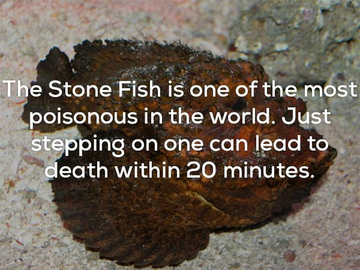Disturbing Facts That Will Chill You Right To The Bone (20 pics)