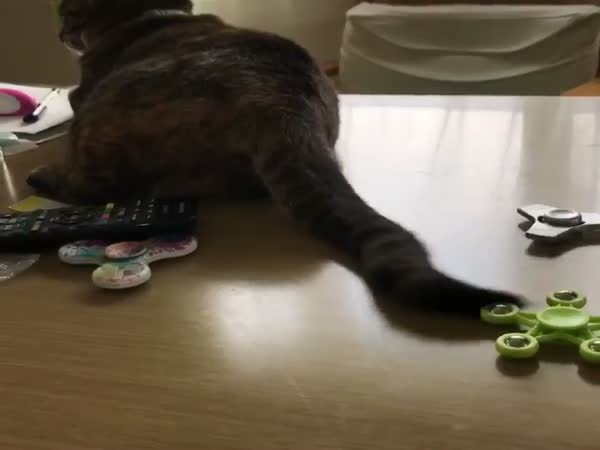 Cat and A Spinner