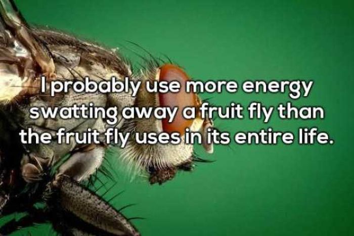 Shower Thoughts To Keep Your Mind Occupied All Day (27 pics)