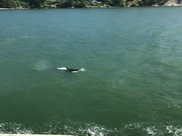 Swimmers Got Out Of The Water When They Saw Killer Whales