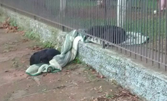 Woman Finds Surprise After Puppy Drags New Blanket Outside (3 pics)
