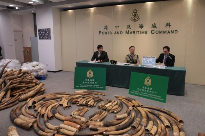 Chinese Customs Officers Confiscate 7 Tons Of Contraband Ivory (6 pics)