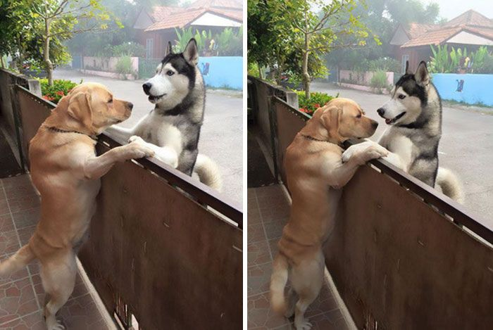Dog Escapes Yard To Hug His Best Friend (2 pics)