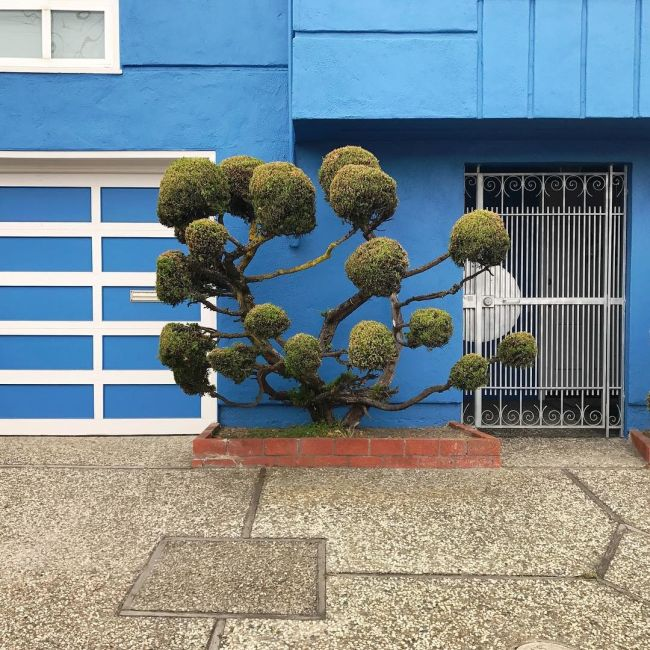 The Unique Trees Of San Francisco (8 pics)