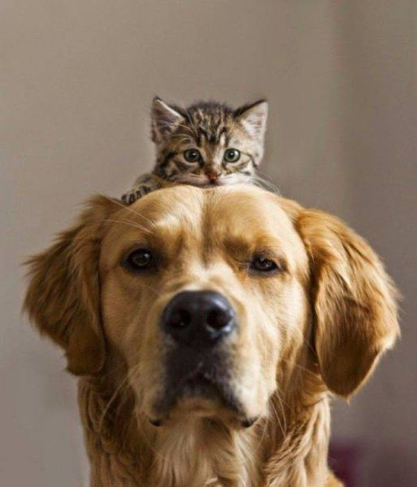 Fun Examples Of Pics That Say More Than Just A Thousand Words (45 pics)