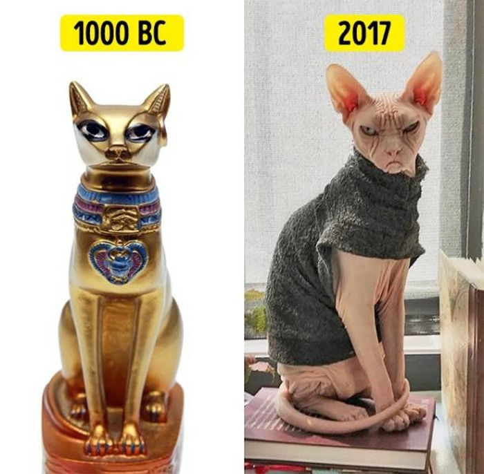 The More Humans Change The More We Stay The Same (11 pics)