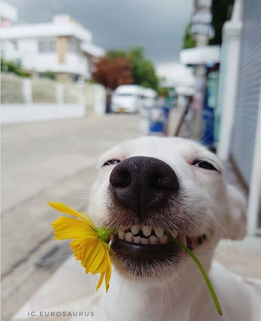 Dog That Always Smile (6 pics)