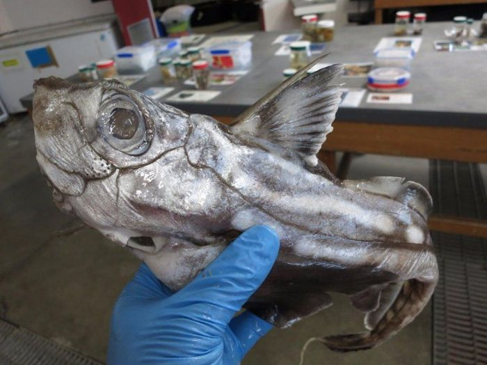 Creepy Things That Are Living In The Ocean (23 pics)
