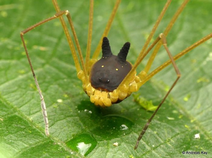 These Spiders Are Adorable Yet Terrifying (4 pics)