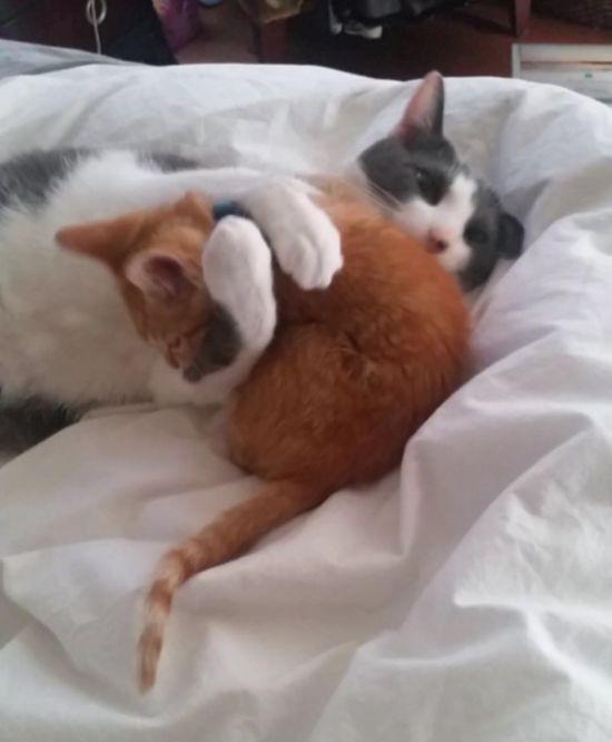 Cat Rescue (5 pics)