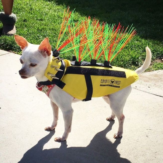 California Couple Creates Mad Max Inspired Outfit For Their Dogs (6 pics)