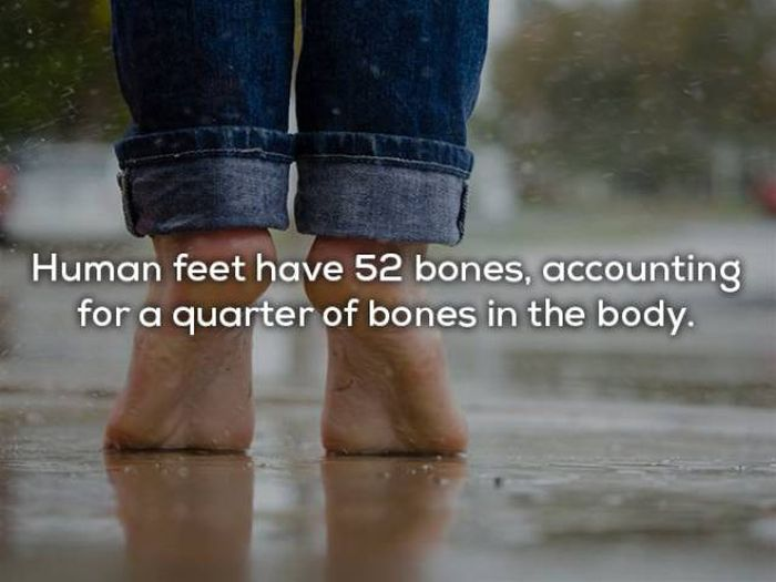 Fascinating Facts About The Human Body (29 pics)