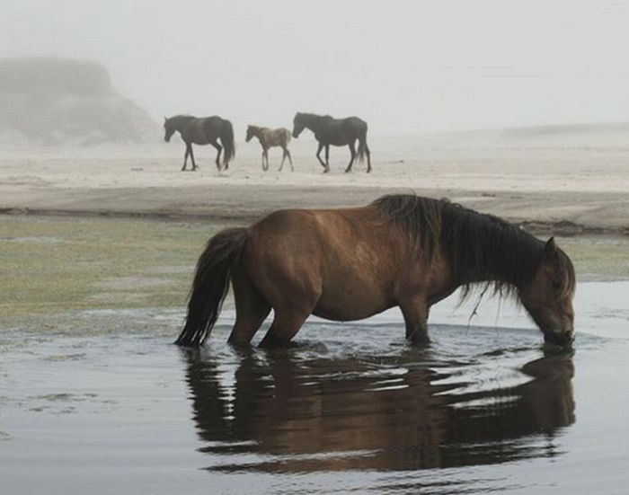 Zoe Lucas Dedicated Her Life To Sable Island (16 pics)