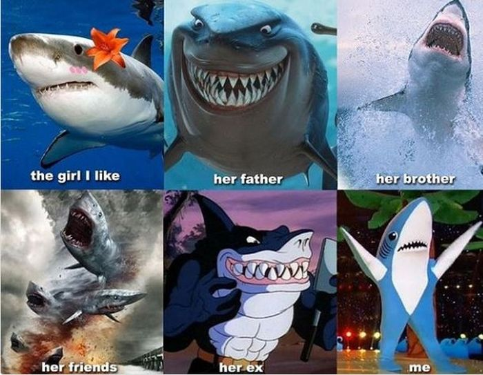 Hilarious Posts About Sharks That Are Sharktastic (17 pics)