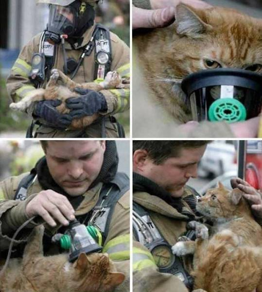Picture Perfect Examples Of Photos That Say More Than A Thousand Words (50 pics)