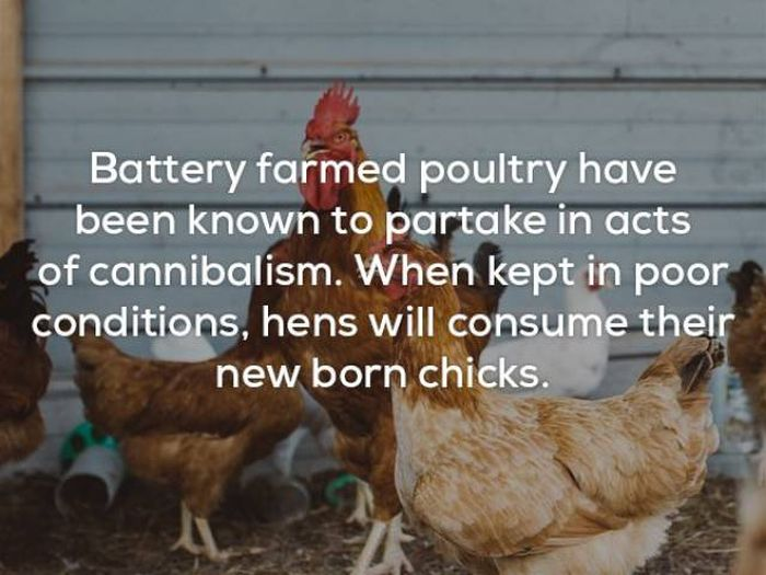Facts That Will Keep You Up All Night Long (22 pics)